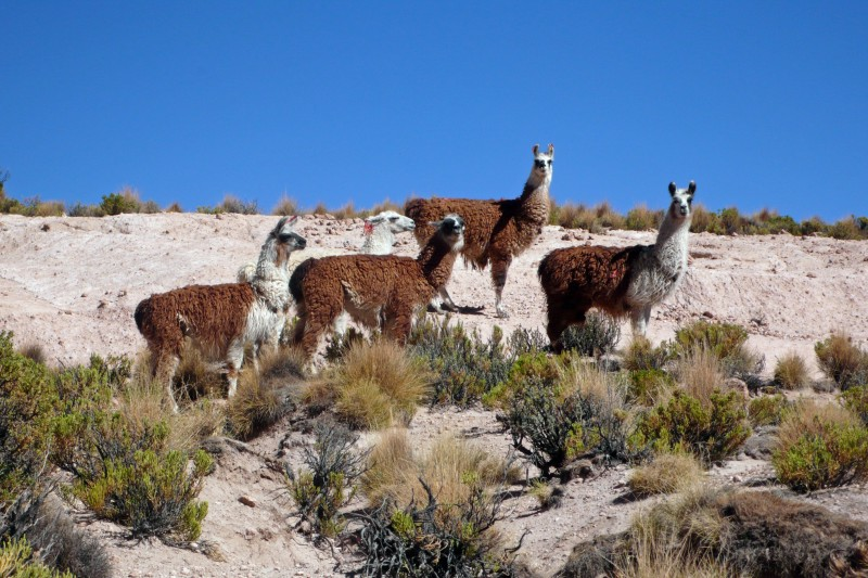 About Chile Tours